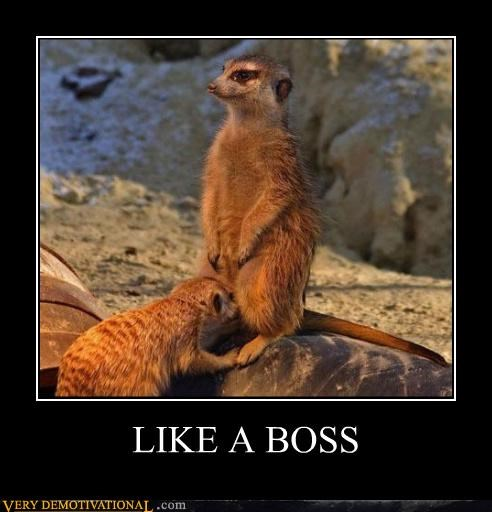 animals Like a Boss Prairie Dogs sexy times