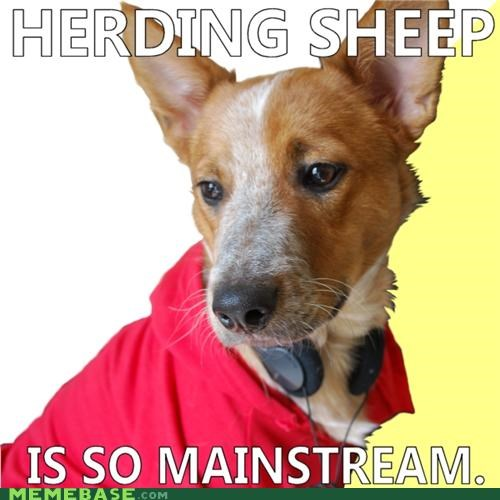 animemes,corgi,dogs,herding,Hipster Kitty,kickball,so mainstream