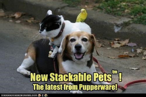 beagle budgie cat new newest pets product pun stack stackable tupperware - 4515098624