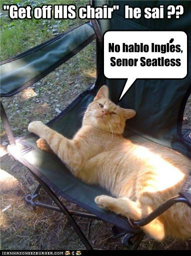caption captioned cat chair evil Hall of Fame his mean ownership refusing seatless selfish tabby vindictive - 4515127808