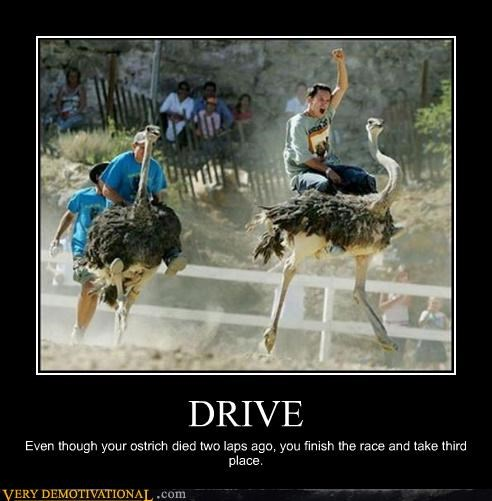 DRIVE Even though your ostrich died two laps ago, you finish the race and take third place.