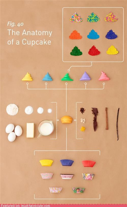 anatomy Chart components cupcake epicute parts