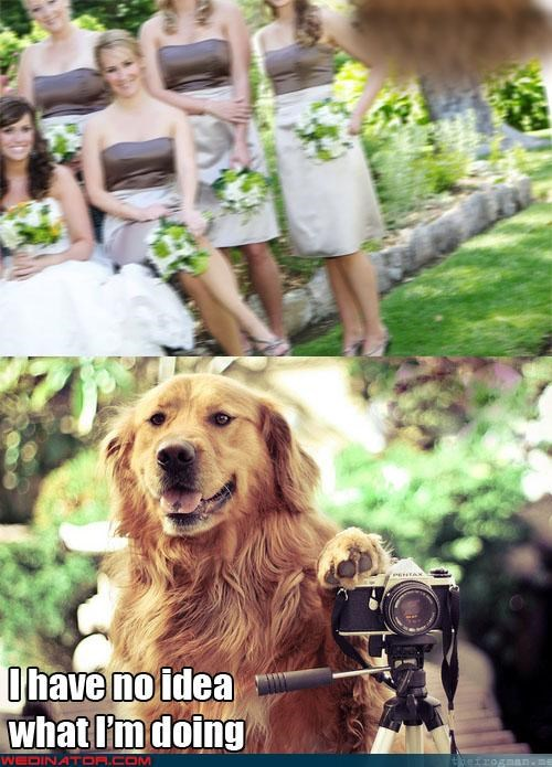 blurry,dogs,funny wedding photos,photographer