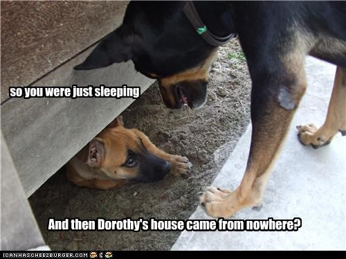 asking Dorothy falling flying german shepherd house mixed breed question shocked sleeping story telling testimony the wizard of oz tornado - 4515430144