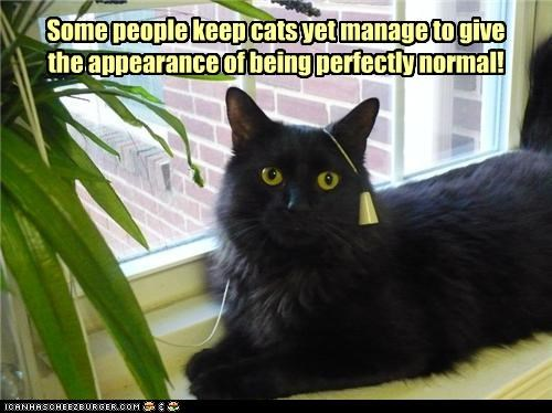 amazed,appearance,caption,captioned,cat,Cats,hiding,normal,people,some,strange,surprised
