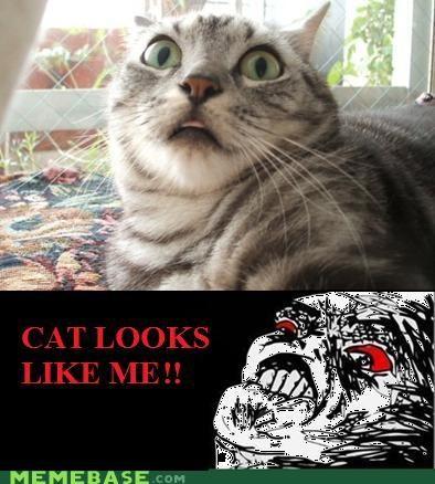 animemes cat looks lik me - 4515775232
