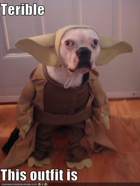 costume,critters,dogs,Movies and Telederp,star wars,talking weird is,yoda
