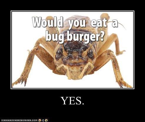 Cheezburger Image 4516036352