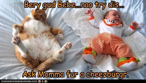 Cheezburger Image 4516412160