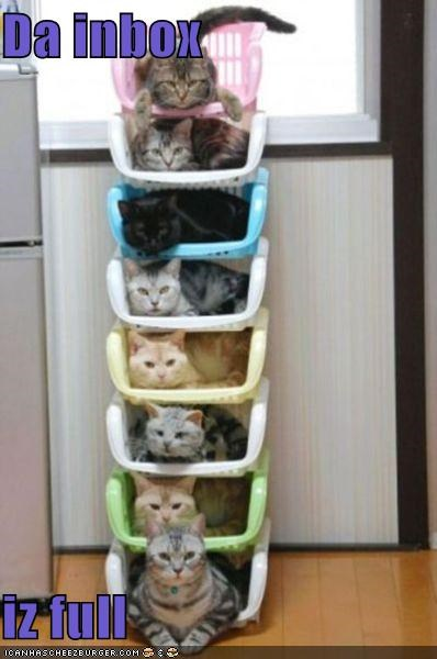 box,boxes,caption,captioned,cat,Cats,double meaning,full,Hall of Fame,inbox,resting,sitting,stacked