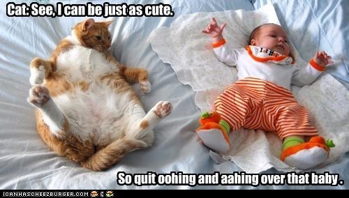 Cat: See, I can be just as cute. So quit oohing and aahing over that baby .