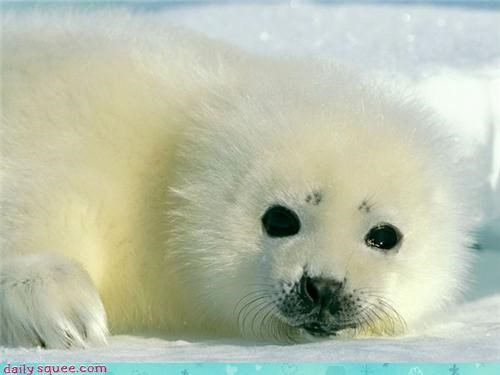 baby cold contrast fallen floofier floofy freshly frigid happy heart ice melted oh my squee seal smiling snow snowing