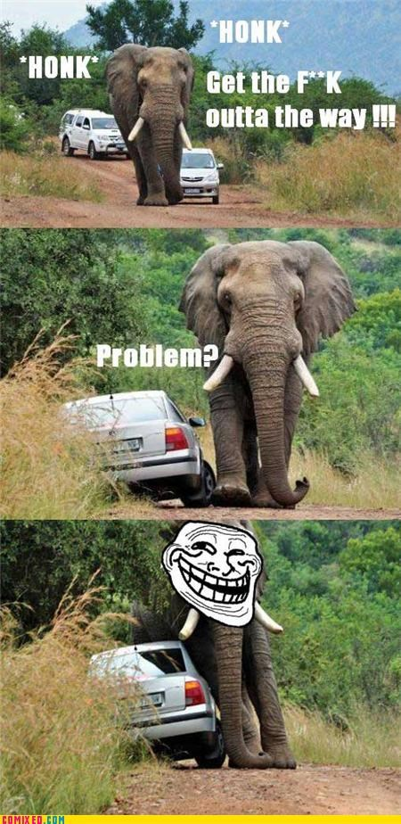 africa cars elephant real life troll wtf - 4517506560