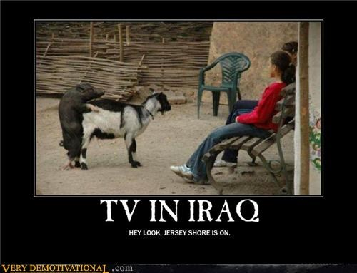 goat interspecies iraq pig TV wtf - 4517913856