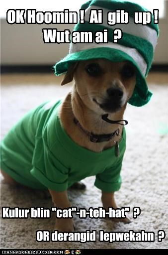 "Dog - OKHoomin! Ai gib up! Wutamai ? Kulur blin ""cat""-D-teh-hat"" OR derangid lepwekahn ? ICANHASCHEE2EURGER cOM"
