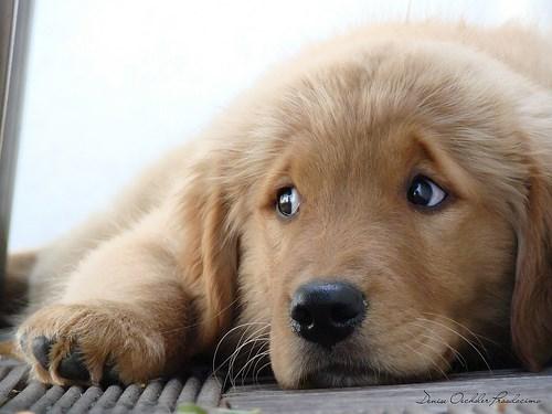 dogs master puppy eyes - 4518149