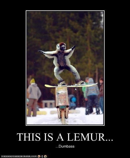 THIS IS A LEMUR... ...Dumbass