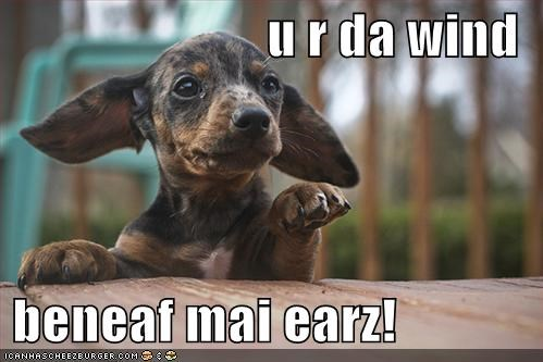 beneath,dachshund,ears,Hall of Fame,happy,love,parody,puppy,song,wind