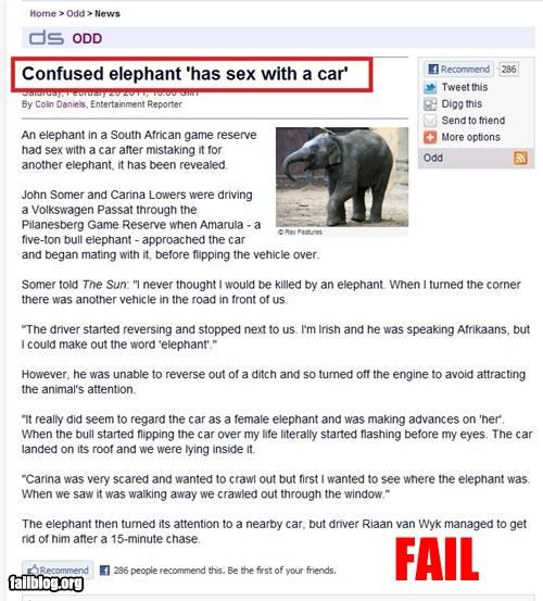 animals cars confused elephants failboat humping news Probably bad News