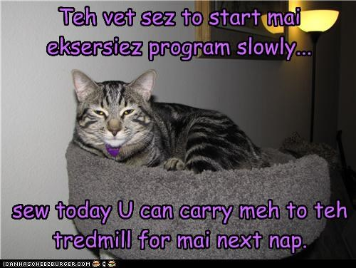 advice,baby steps,caption,captioned,carry,cat,exercise,program,slowly,start,task,vet