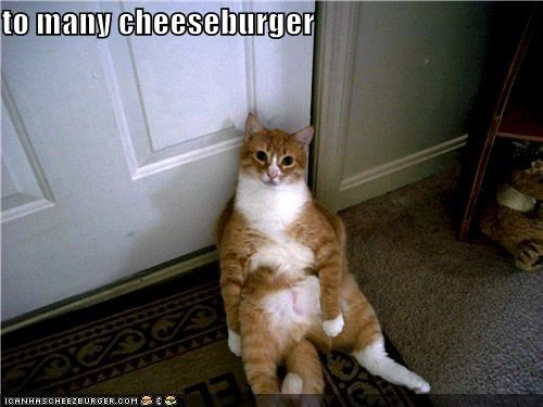 Cheezburger Image 4518958080