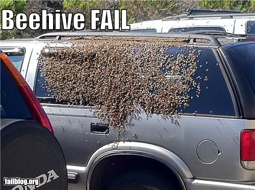 beehive,bees,cars,failboat,g rated,insects,yikes