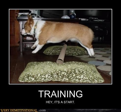 corgi training jump - 4519073536