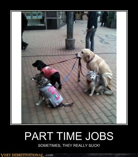 part time jobs,dogs,work,wtf
