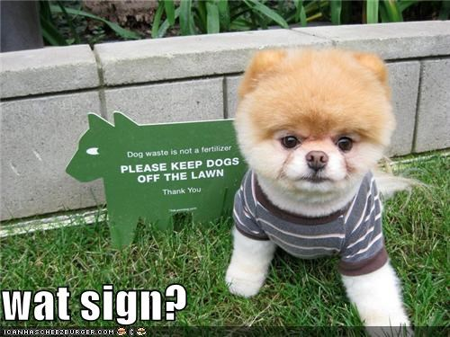 boo confusion denial ignorance pomeranian sign