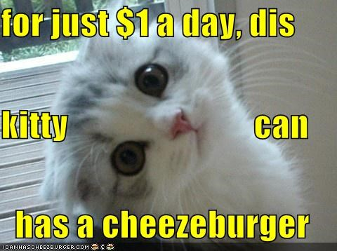 caption captioned cat cheezburger daily day dollar donation Hall of Fame i can has infomercial kitten one - 4519343104