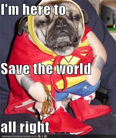 alright,costume,dressed up,Hall of Fame,here,pug,save,superman,world
