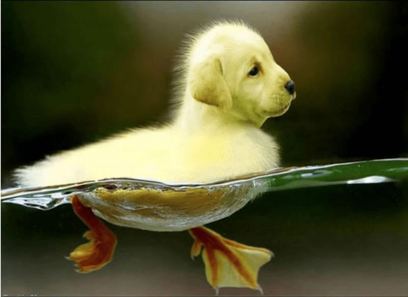 dogs birds photoshop funny - 4519685