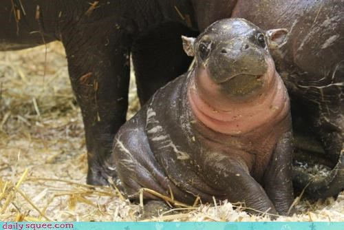 baby happy hippo hungry irresistible smiling sweet wide eyed - 4519687680
