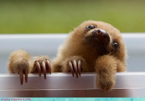 adorable,baby,cute,grip,hanging out,happy,letting go,never,sloth,smiling,strong
