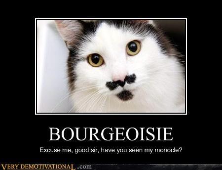 cat mustache monocle - 4519772416