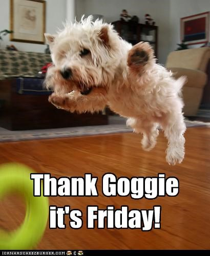 do want excited FRIDAY Hall of Fame happy jump jumping thank-goggie-its-friday west highland white terrier - 4522049536