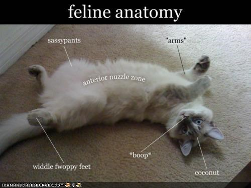 anatomy best of the week caption captioned cat diagram feline label labels