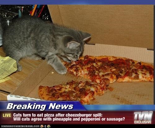 breaking news cats turn to eat pizza after cheezeburger spill