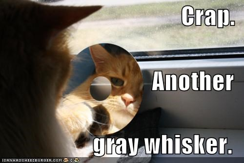 aging,another,caption,captioned,cat,CD,crap,disappointed,do not want,gray,reflection,tabby,whisker