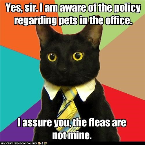 are-the-fleas-pets,Business Cat,fleas