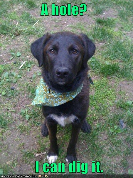 bandana border collie dig dig it digging double meaning figure of speech hole - 4523235072