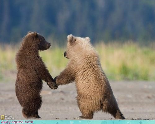 acting like animals adventure baby bear bears come with me cub fantasy follow hand holding hands magical - 4523331072