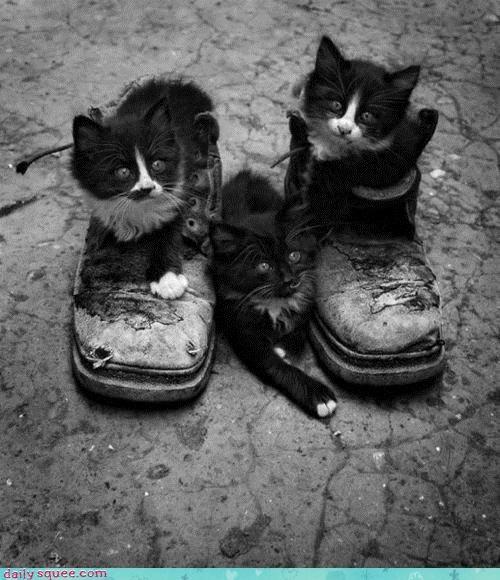 cat Cats cliché kitten literal Puss in Boots - 4523332352