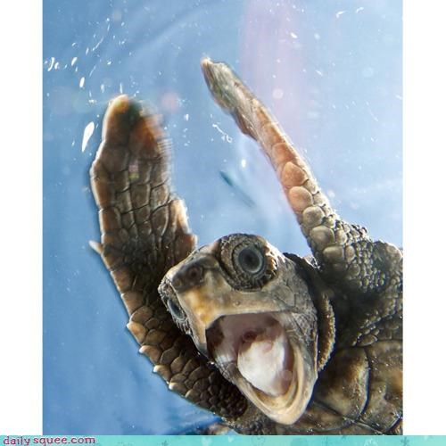 acting like animals,announcer,announcing,excited,game,goal,proclaiming,sea turtle,shouting,sport,sports