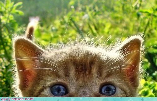 answer game kitten obvious peekaboo question - 4523338496