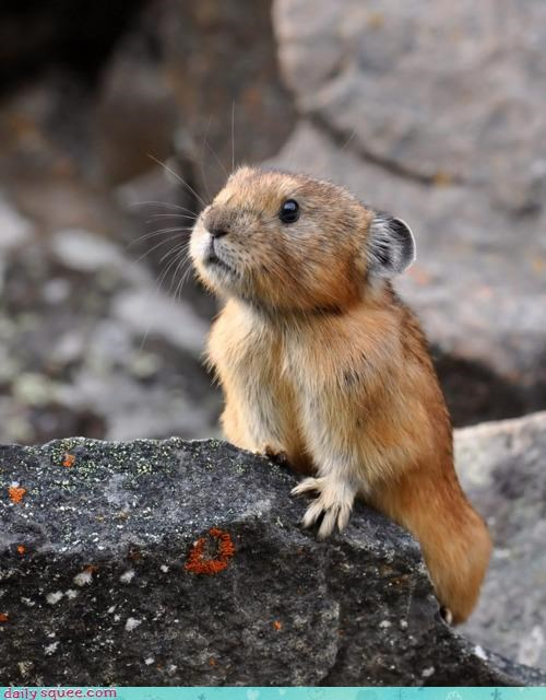 appropriate aptly named comparison itty bitty name pika pretty tiny - 4523346944