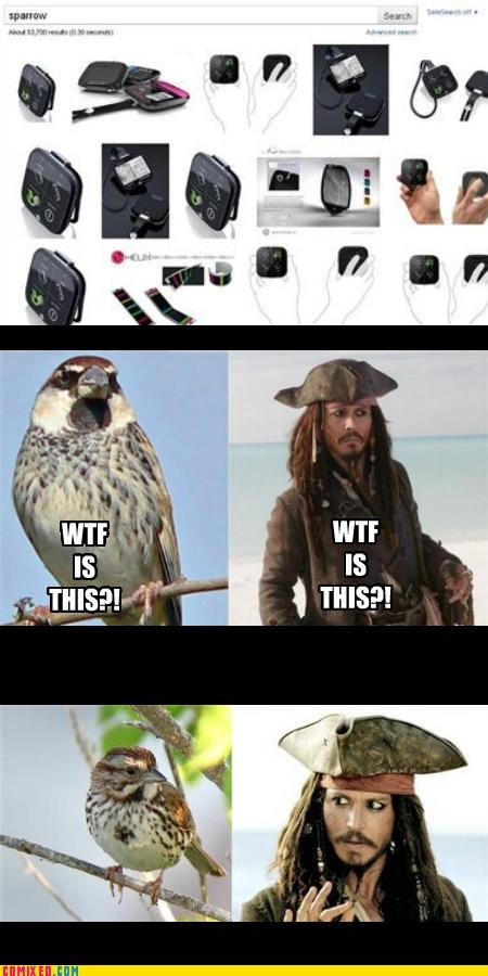 google,pirates of the carribean,search,sparrow