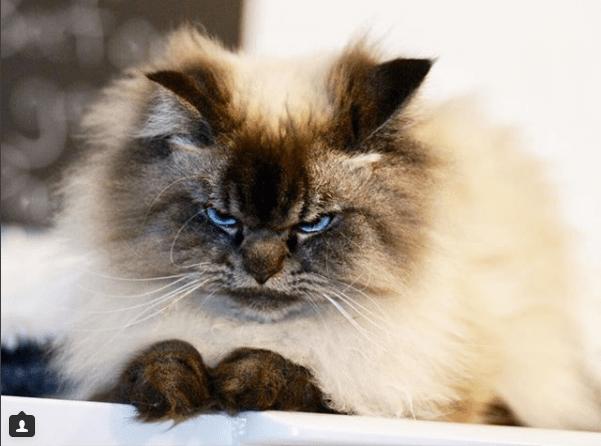 kitten angry - 4523781