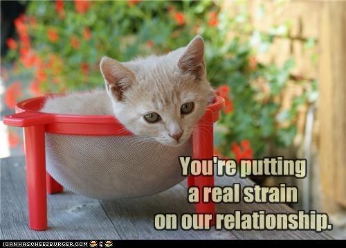 caption captioned cat kitten pun putting relationship strain strainer - 4524230144
