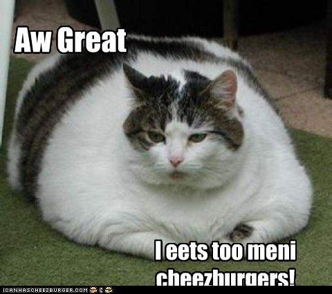 Cheezburger Image 4524264192